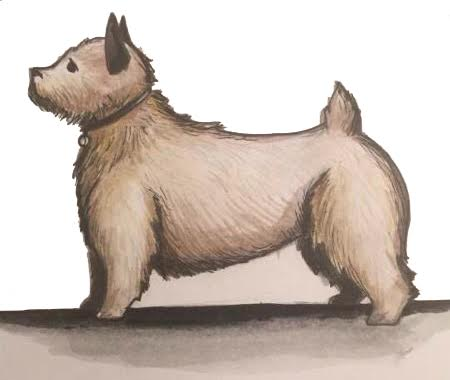 cairn terrier hun